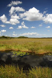Taylor Slough. Scenic view of Taylor Slough in Everglades National Park Stock Photos