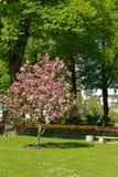 Taynitsky庭院是在克里姆林宫内墙壁的都市公园位于俄罗斯 免版税库存图片