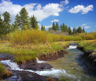 Tayolr Creek, Lake Tahoe. Water running through a meadow and pines trees on a sunny day in Lake Tahoe royalty free stock photos