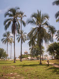 Tayrona buda Przez drzewek palmowych Zdjęcie Stock
