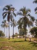 Tayrona förlägga i barack till och med palmträd Arkivfoto