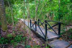 Tayrona natural national park walking path Stock Images