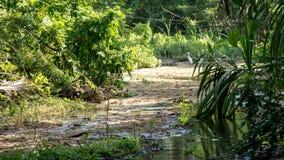 Tayronas przyroda Zdjęcie Royalty Free