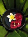 Tazón de fuente de Aromatherapy Fotografía de archivo libre de regalías