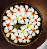 Tazón de fuente de flores Imagenes de archivo