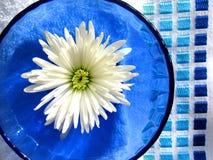 Tazón de fuente de la flor Imagenes de archivo