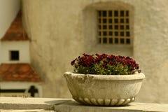 Tazón de fuente de la flor Fotografía de archivo libre de regalías