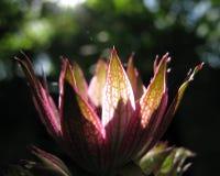 Tazón de fuente de la flor de luz del sol Fotografía de archivo