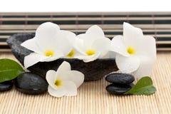 Tazón de fuente de la roca con el frangipani   Fotografía de archivo libre de regalías