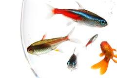 Tazón de fuente de los pescados fotos de archivo