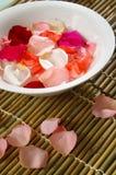 Tazón de fuente de Rose Fotos de archivo