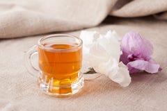 Taza con té herbario Fotografía de archivo