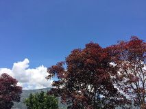Taza de árboles coloridos con el fondo azulado del cielo imagen de archivo
