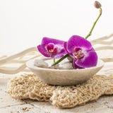 Taza de flores de la orquídea para el tratamiento de la belleza Foto de archivo