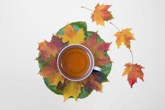 Taza de hojas del té y de otoño en el blanco Imágenes de archivo libres de regalías