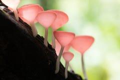Taza de los hongos Fotos de archivo libres de regalías