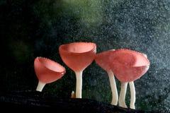 Taza de los hongos Imagen de archivo libre de regalías