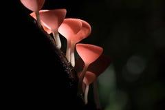 Taza de los hongos Imagen de archivo