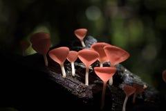 Taza de los hongos Fotos de archivo
