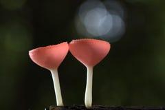 Taza de los hongos Imágenes de archivo libres de regalías