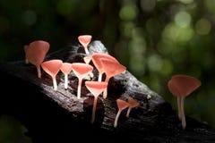 Taza de los hongos Foto de archivo libre de regalías
