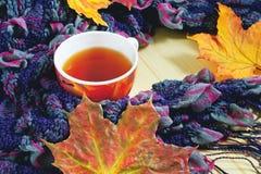 Taza de té bufanda Fotografía de archivo libre de regalías