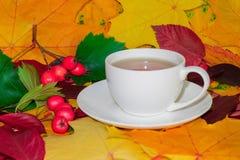 Taza de té caliente en tonos del otoño fotos de archivo