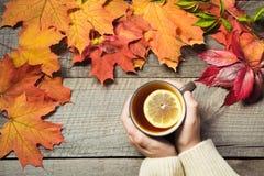 Taza de té con el limón a disposición, hojas de otoño coloridas en el tablero de madera Todavía de la caída vida, vintage Visión  Imagen de archivo libre de regalías