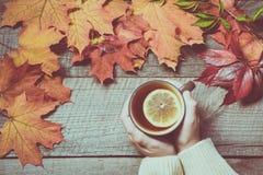 Taza de té con el limón a disposición, hojas de otoño coloridas en el tablero de madera Todavía de la caída vida Visión superior  Imágenes de archivo libres de regalías