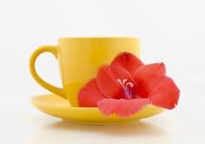 Taza de té con la flor en un fondo blanco Imagen de archivo libre de regalías