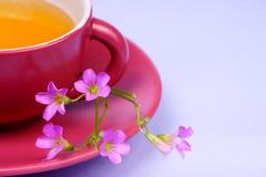 Taza de té con la flor - goce de su té fresco Foto de archivo libre de regalías