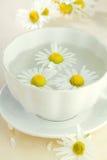 Taza de té de manzanilla Fotografía de archivo