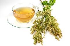 Taza de té del alazán en blanco Imagen de archivo libre de regalías