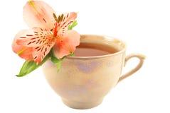 Taza de té del sabor Foto de archivo libre de regalías
