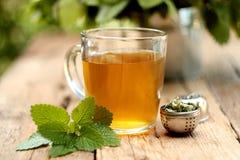 Taza de té del toronjil Imagenes de archivo