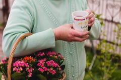 Taza de té en las manos de una más vieja mujer Fotos de archivo