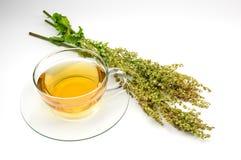 Taza de té fresco del alazán Foto de archivo libre de regalías