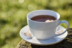Taza de té por mañana Imagen de archivo libre de regalías