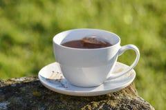 Taza de té por mañana Imagenes de archivo