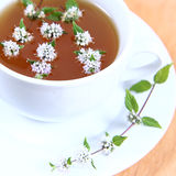 Taza de té verde Imagen de archivo