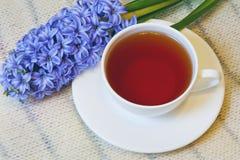 Taza de té y de jacinto Imagen de archivo