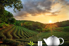 Taza de té y de menta con el fondo agradable Imagen de archivo