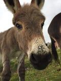 Taza del burro Imagen de archivo libre de regalías