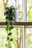 Taza del esmalte del vintage con un interior de la planta verde en un marco de ventana blanco de marco con los ?rboles en el fond imagenes de archivo