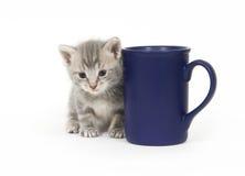 Taza del gatito y de café fotografía de archivo libre de regalías