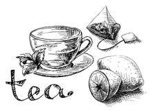 Taza, menta y bolsita de té Fotos de archivo libres de regalías
