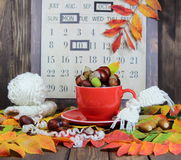 taza roja con una bufanda hecha punto, las castañas y las bellotas contra la perspectiva de un calendario del otoño Foto de archivo