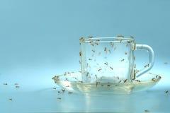 Taza y platillo con las hormigas fotografía de archivo