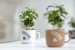 Tazas de café Imagenes de archivo