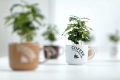 Tazas de café Fotos de archivo libres de regalías